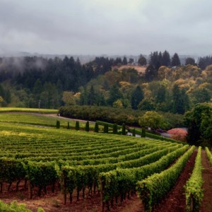 oregon-wine-vineyards-400x400